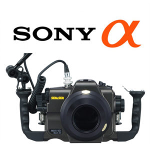 Sea & sea System set up sony