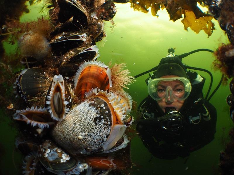 Raymond Wennekens - Sea & Sea ambassadeur - portfolio