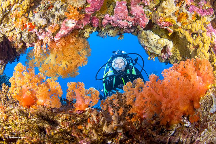 Bruno_van_Sean_portfolio_Sea_and_Sea