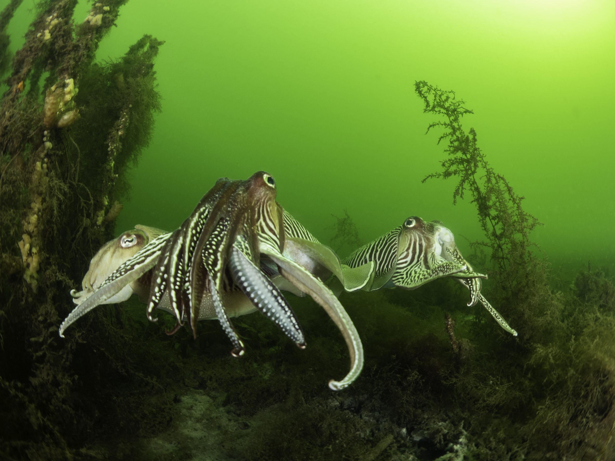 Daniel_Versteeg_portfolio_Sea_&Sea